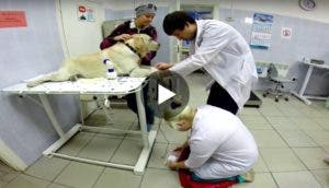 perro-dona-sangre-play