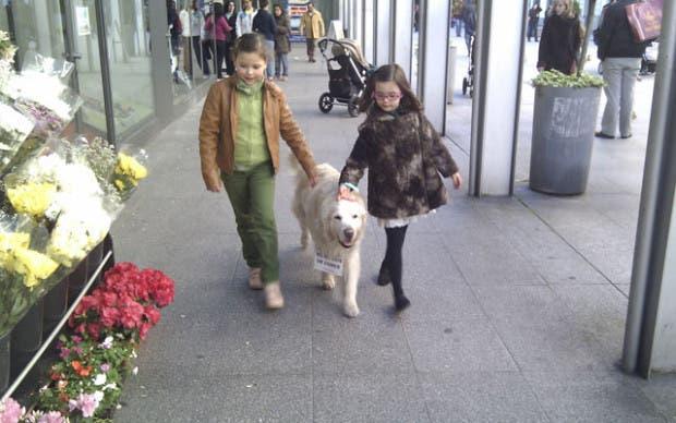 perro-floristeria-coruna
