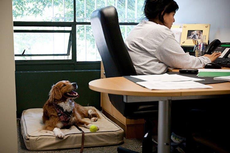 perro-oficina2