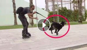 perro-patines-play