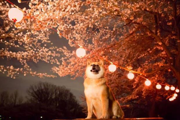 perro sonriente11