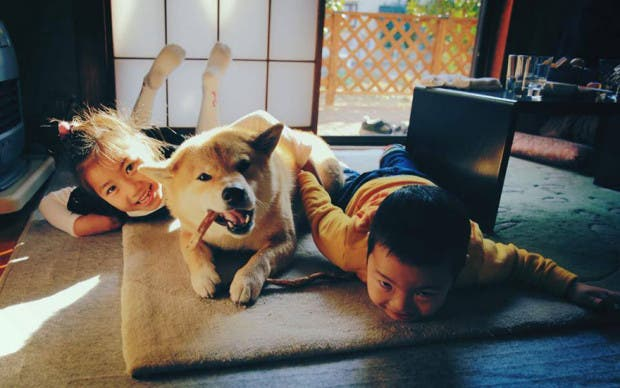 perro sonriente15