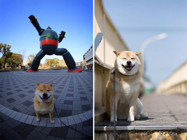 perro sonriente16