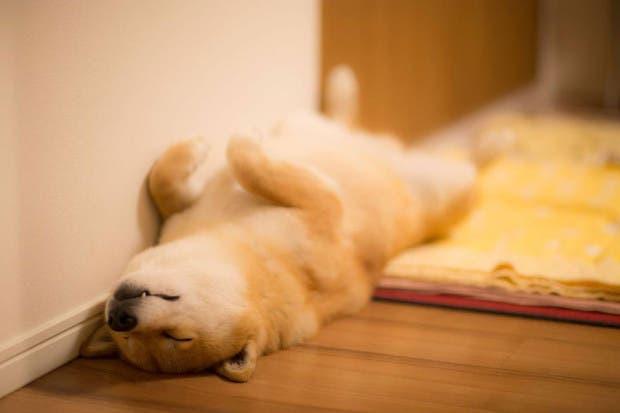 perro sonriente2