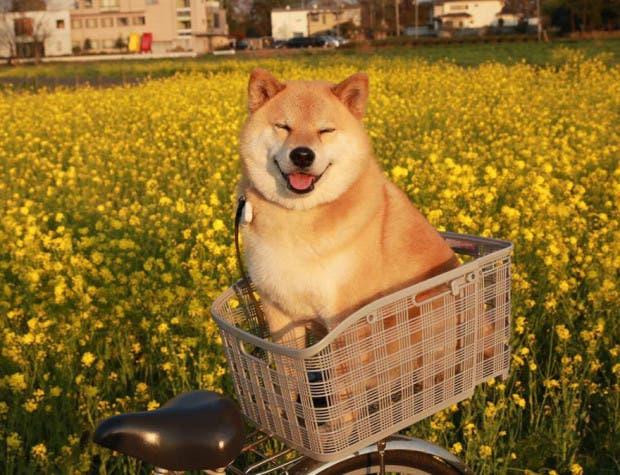 perro sonriente3