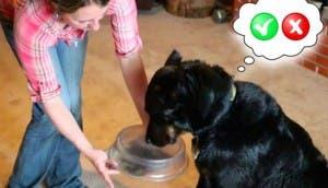 perros-entrenados-gluten