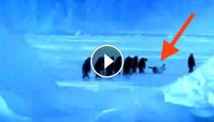 pinguino-se-cae-play