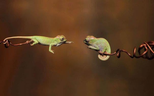 reptiles1