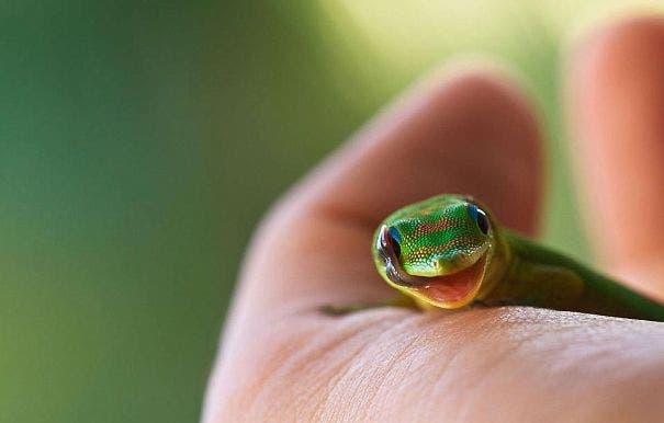 reptiles11