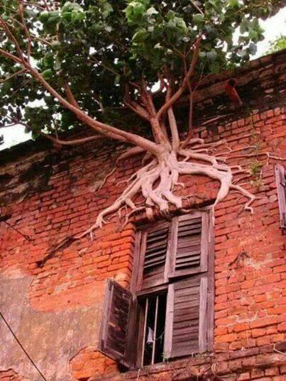 La naturaleza siempre busca sobrevivir (4)