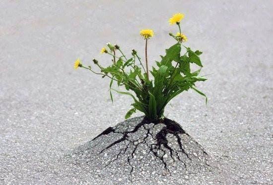 La naturaleza siempre busca sobrevivir (5)