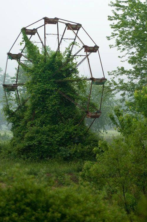 La naturaleza siempre busca sobrevivir (6)