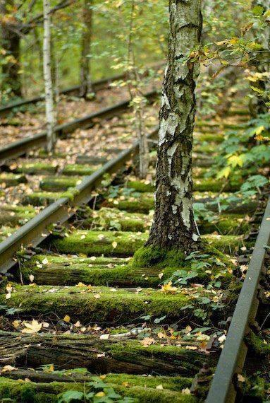 La naturaleza siempre busca sobrevivir (7)