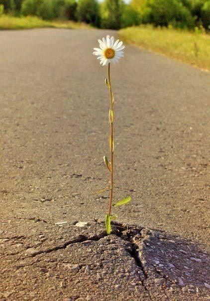La naturaleza siempre busca sobrevivir (8)