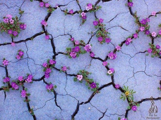 La naturaleza siempre busca sobrevivir (9)