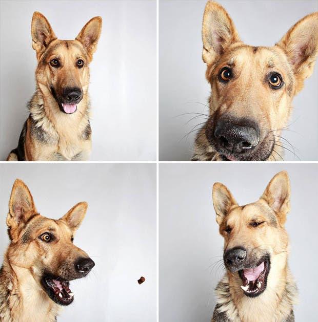 adoptar perros (12)