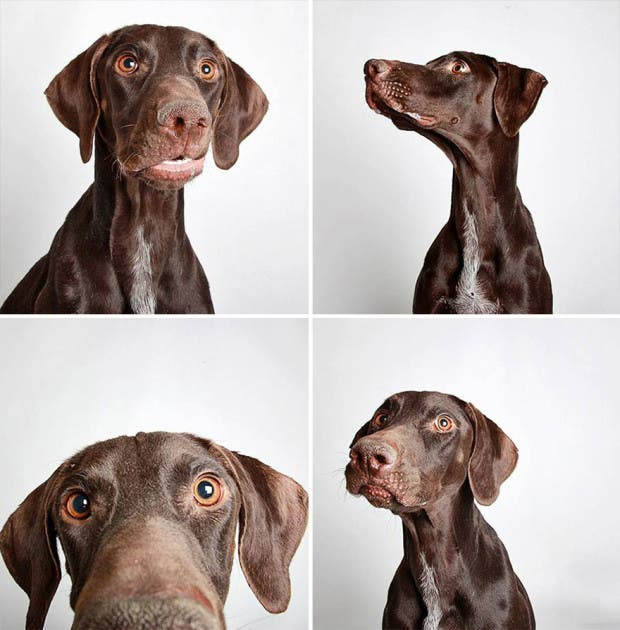 adoptar perros (14)