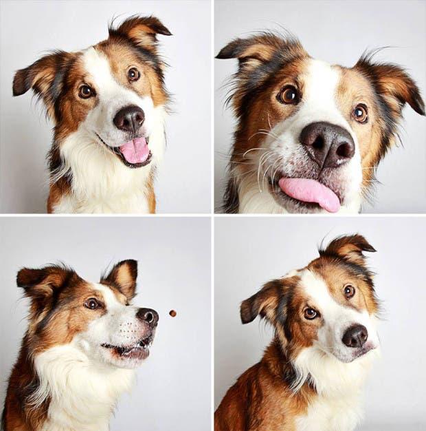 adoptar perros (15)
