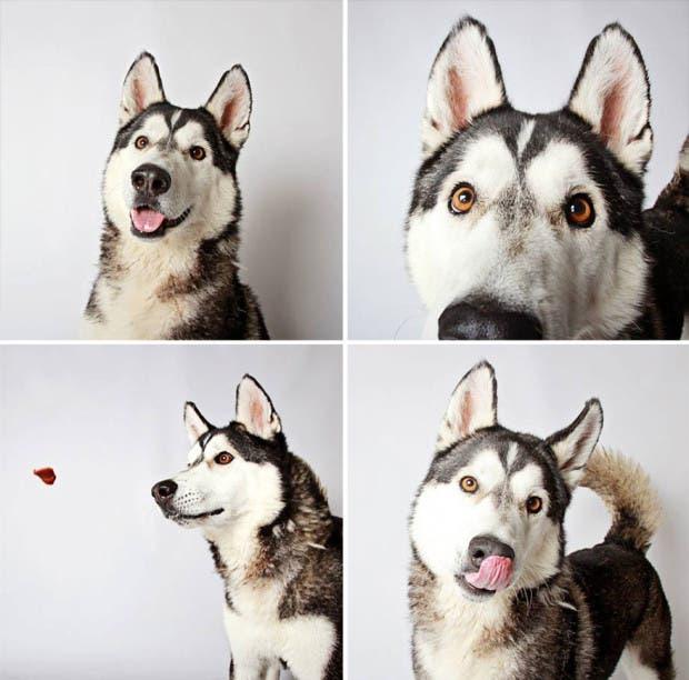 adoptar perros (16)