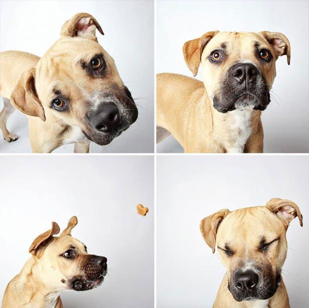 adoptar perros (4)