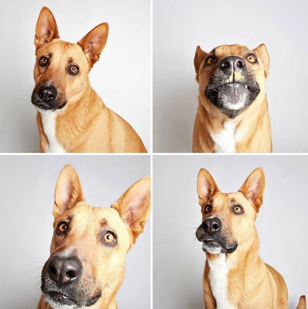 adoptar perros (5)