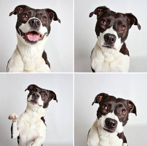 adoptar perros (6)