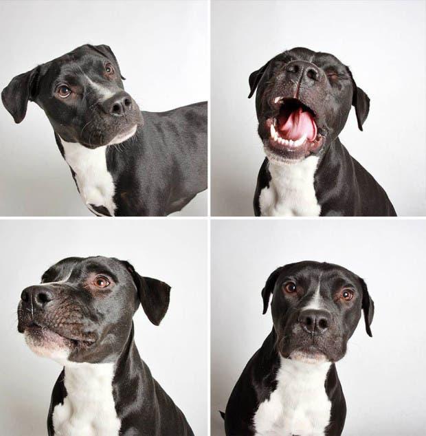 adoptar perros (7)