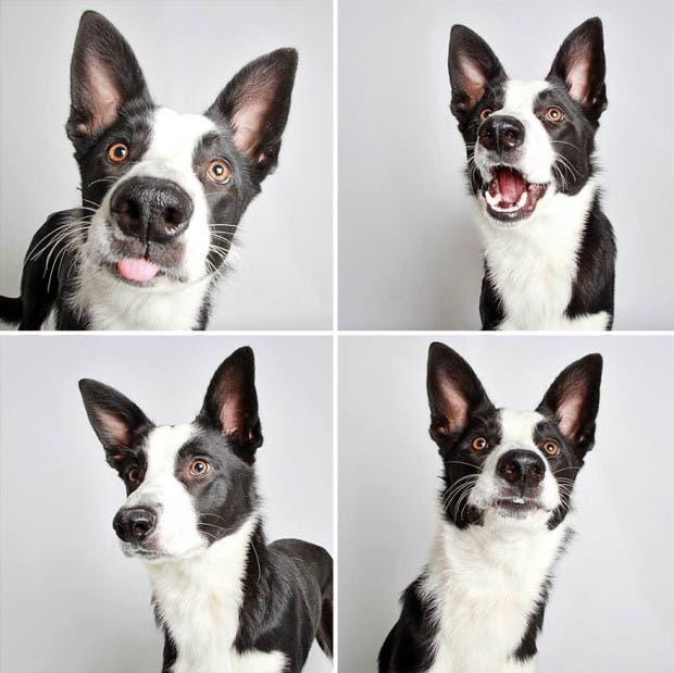 adoptar perros (8)