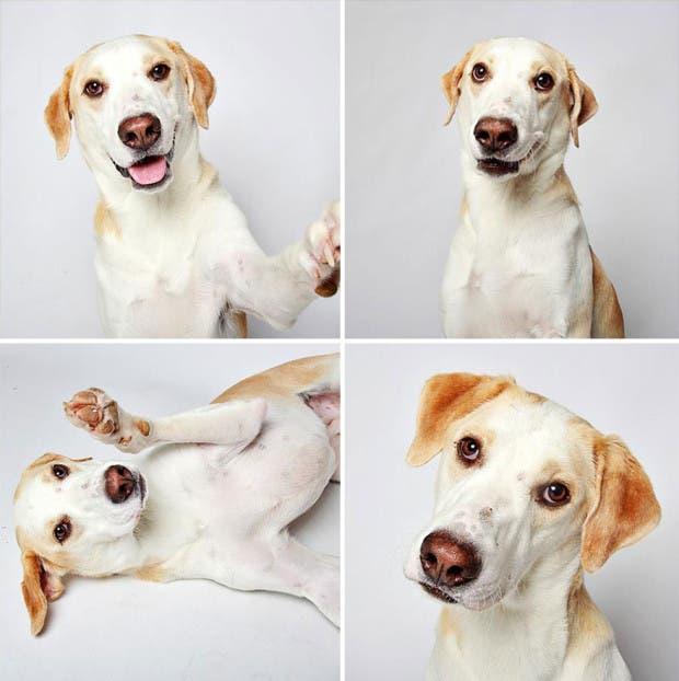 adoptar perros (9)
