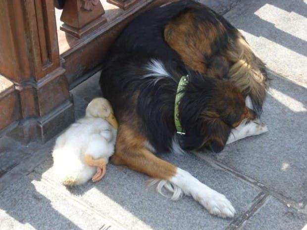 animales amigos (1)