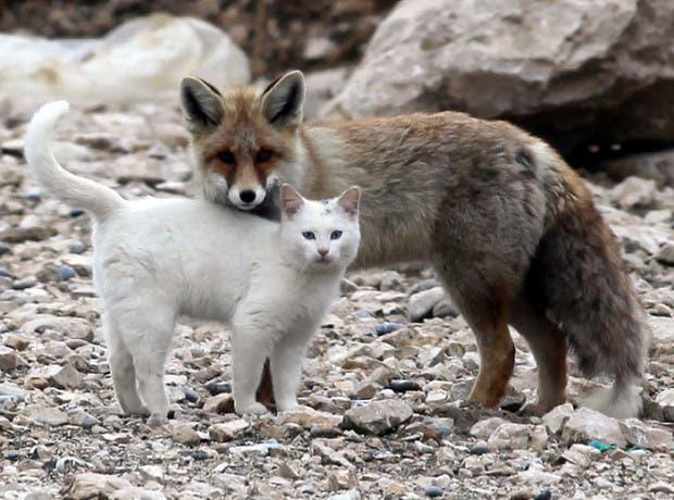 animales amigos (12)