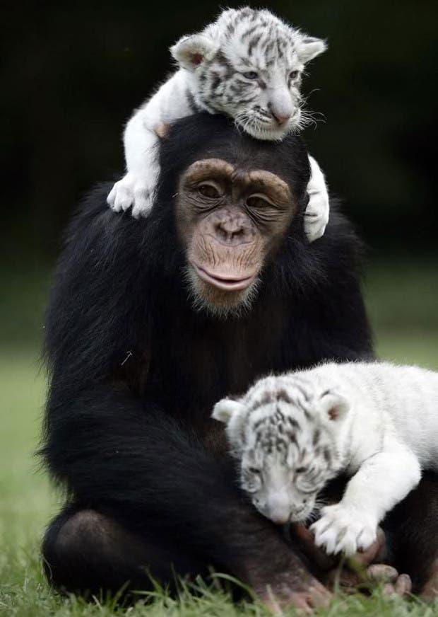 animales amigos (21)