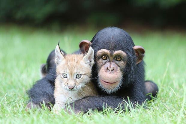 animales amigos (28)