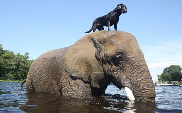 animales amigos (3)