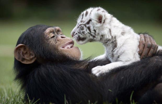 animales amigos (31)