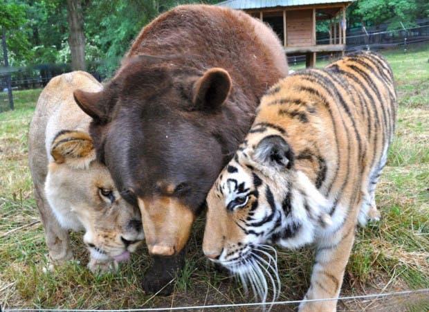 animales amigos (32)