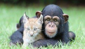 animales-amigos-portada