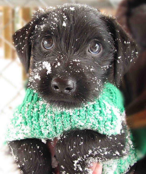 animales-primera-vez-nieve (1)