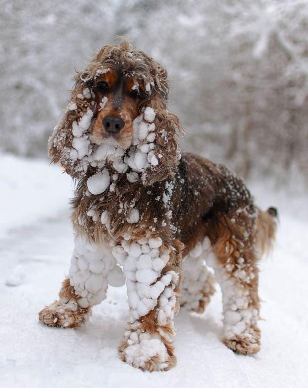 animales-primera-vez-nieve (18)