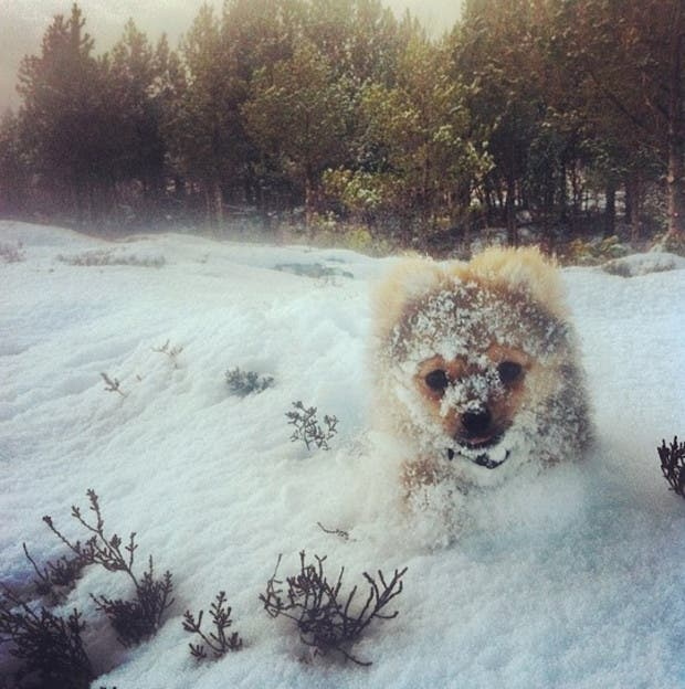animales-primera-vez-nieve (19)