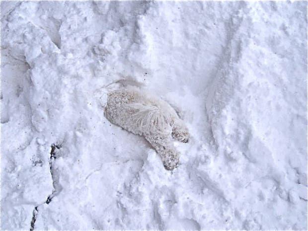 animales-primera-vez-nieve (20)