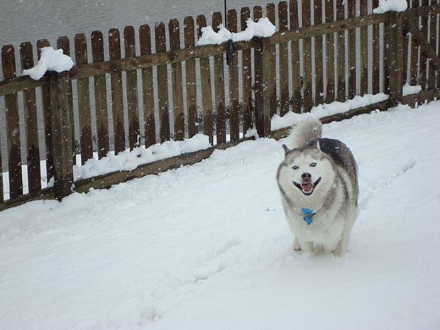 animales-primera-vez-nieve (22)