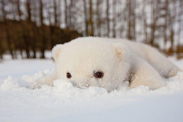 animales-primera-vez-nieve (4)