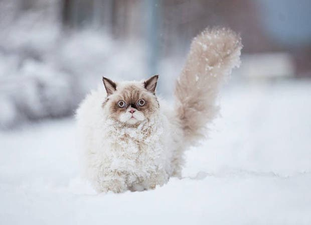 animales-primera-vez-nieve (5)