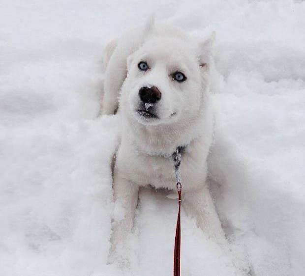 animales-primera-vez-nieve (8)