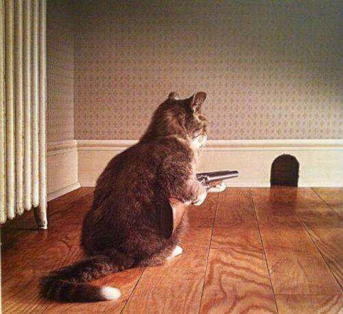 animales solos en casa (14)