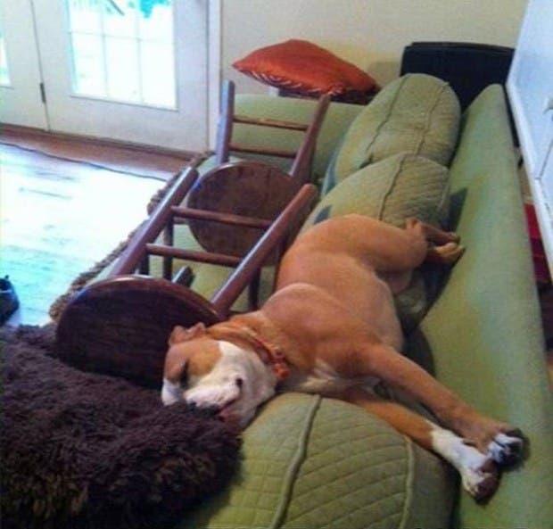 animales solos en casa (2)