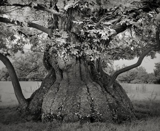 arboles antiguos (4)
