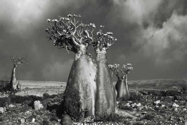 arboles antiguos (5)