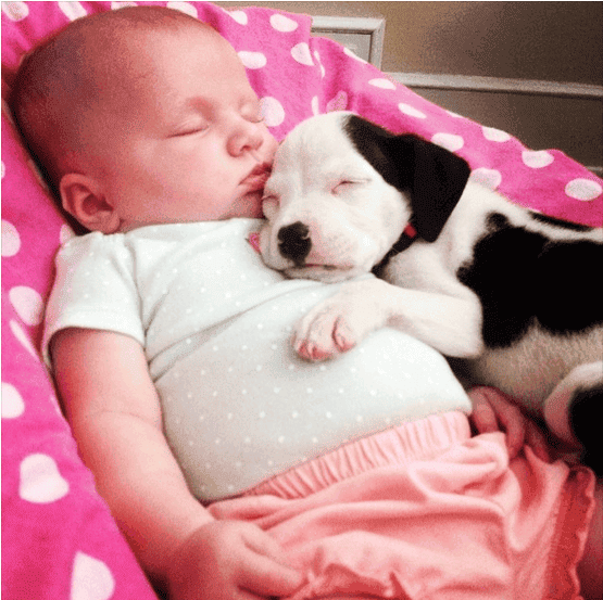 bebe perrito
